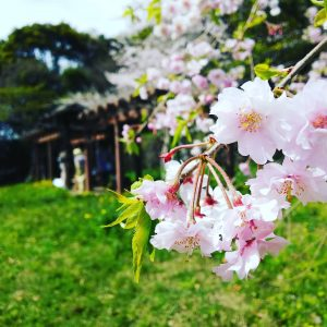 桜の奥に着物